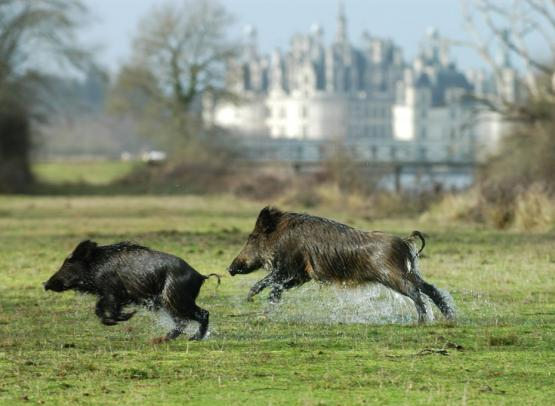 (c) Domaine National de Chambord (2)