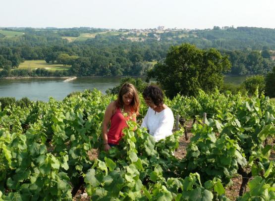 domaine-viticole-genaudieres-le-cellier-44-DEG-1