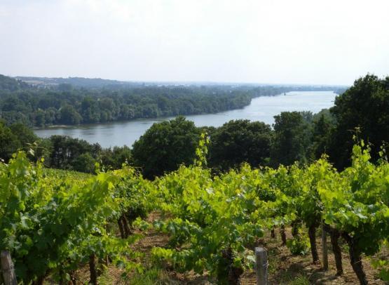 domaine-viticole-genaudieres-le-cellier-44-DEG-2