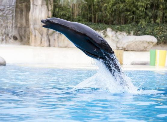 spectacle-otaries-zooparc-de-beauval-10