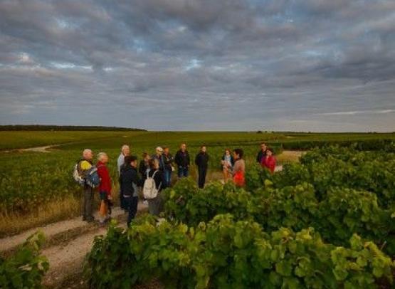 RDV-dans-vignes-Credit-ADT-Touraine-LDeSerres-2029--34-