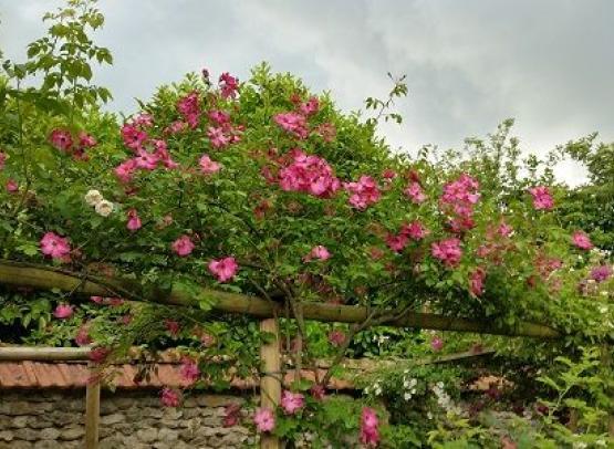 rosier 'roville' - Copie