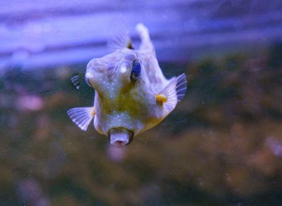 grand_aquarium_de_touraine (9)