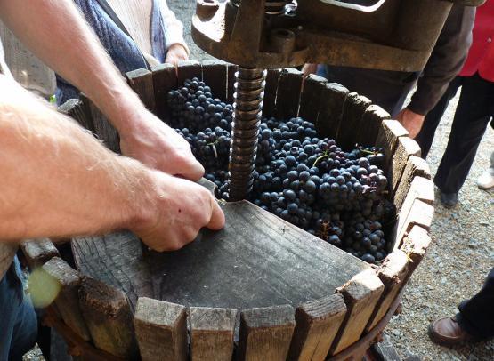 vendanges au Musée de la vigne et du vin d'Anjou