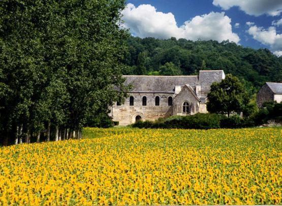 Sanctuaire Cravant tournesols