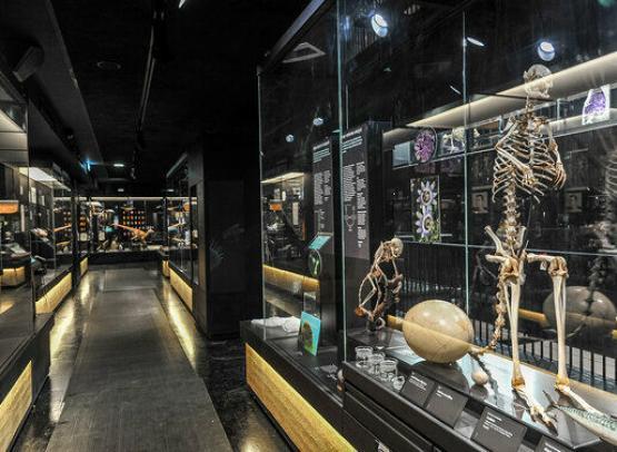 MOBE - MUSEUM D'ORLEANS POUR LA BIODIVERSITE ET L'ENVIRONNEMENT