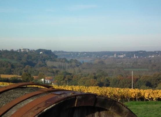 drain-vignoble-route-touristique-galloires (2)