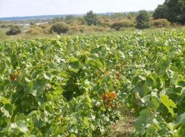 vignoble-amiant-st-mars-de-coutais-44-DEG-1