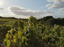 coteaux-vignes-drain-champtoceaux-oa©ec - Copie
