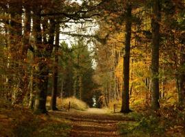 PNA49-Forêt de Combrée-1